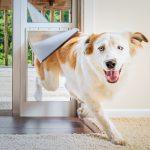 5 Saker att Veta Innan du installerar en Husdjursdörr